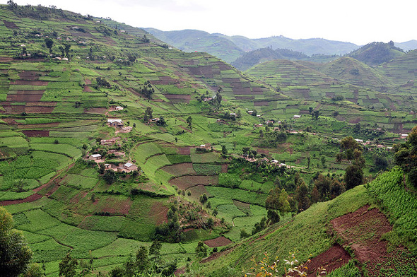 The hills of Southwest Uganda. By the time you're farming there, you know people really are out of space.